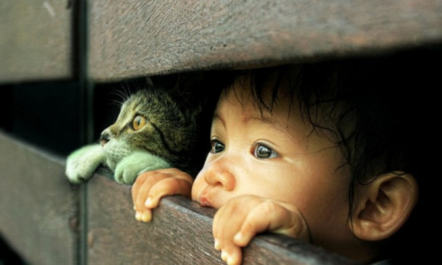 Почему все дети хотят кота: 30 фотообъяснений