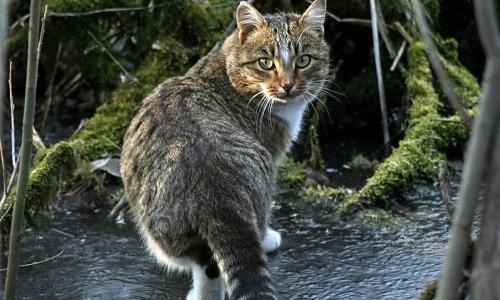 Кошка настойчиво звала в лес: увиденное заставило смолкнуть