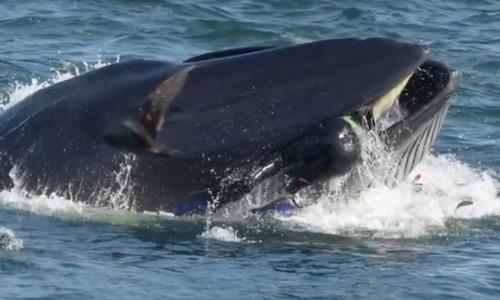 Горбатый кит чуть не проглотил двух женщин на каяке