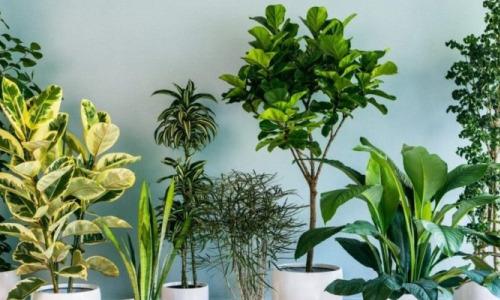 От каких комнатных растений лучше избавиться?