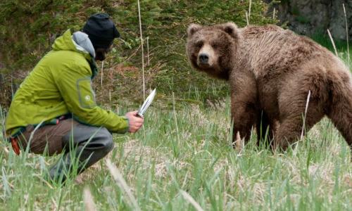 Медведица пришла за помощью к людям, рискуя жизнью