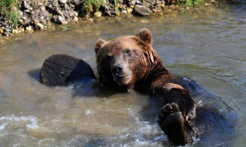 Мужчина спас медведя: он и подумать не мог, что он так отблагодарит