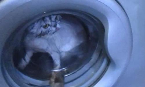 Кот 12 минут провел в работающей стиральной машине и выжил