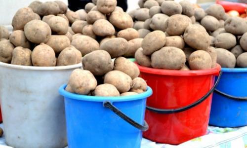 С одного куста два ведра картофеля? Хитрый способ, как добиться урожая мечты