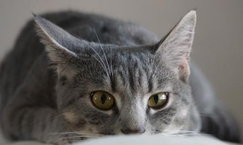 Кот спас годовалую девочку от голодной смерти в Москве