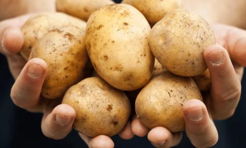 Кладезь витаминов: как картофель влияет на организм